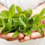 La stevia, dolcificante rivoluzionario