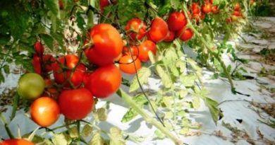 #Sicilia. Bando Isi-Agricoltura 2016: stanziati oltre 5 milioni di euro