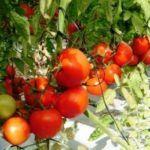 #Siracusa. Anche l'Agricoop Bio nell'europea Apo Conerpo