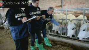 Carabinieri Nas mucche 2