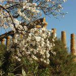"""Turismo. Alla scoperta della Valle dei Templi con il """"Mandorlo in fiore Express"""""""