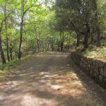 #Sicilia. Dal Patto per il Sud 60 milioni per boschi e aree verdi