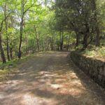 #Catania. Ritrovato il disperso che cercava castagne nel bosco