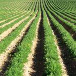 #Sicilia. Graduatoria provvisoria GAL: 120 milioni per agricoltura