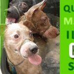 #Caltanissetta. Crimini contro gli animali, bruciato cane a Butera