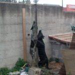 #Palermo. Brutalmente uccisi e poi impiccati i cani di Pino Maniaci