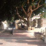 #Trapani. Bimba di 4 anni minacciata da cani nel cimitero di Marsala
