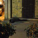 #Ragusa. Si costituisce il killer dell'esponente della 'ndrina Piromalli-Molè