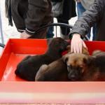 #Trapani. Giornata per la difesa del cane a Mazara del Vallo