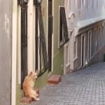 #Catania. Lotta al randagismo. Successo per la microchippatura in piazza