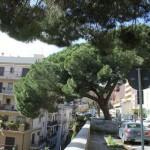 #Messina. Tragedie da prevenire: l'albero pericolante in viale Italia