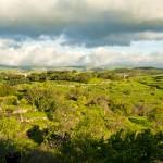 #Regione. L'Ars chiede una modifica dell'IMU agricola