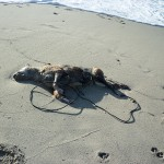 #Messina. Maltrattamenti agli animali: cane ucciso e gettato in mare