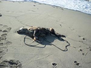 Cane spiaggiato