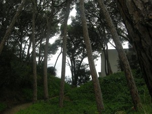 Gli alberi che saranno abbattuti per creare un varco