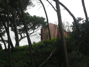 Le palazzine che si sostiene siano minacciate dagli alberi