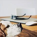 #Ragusa. Cani e doveri dei proprietari, a maggio cinque incontri