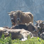 #Siracusa. Rubavano bestiame nella campagne di Canicattini Bagni, tre arresti