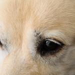 #Catania. Successo per la microchippatura in piazza, 52 i cani registrati