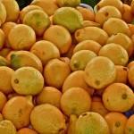 #Siracusa. Sorpresi ladri di limoni nelle campagne di Avola