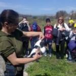 #Siracusa. Al Faro Caderini rilasciati in natura esemplari di anatre e rapaci