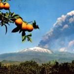 #Sicilia. Appuntamenti internazionali di ANCI e ICE tra Palermo e Catania sull'agrobusiness nell'Isola