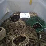#Sciacca. Vendeva molluschi protetti, denunciato 24enne