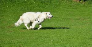 dog-217184_640
