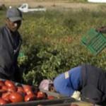 #Trapani. Lotta al caporalato e al lavoro in nero, sanzioni per oltre 46 mila euro