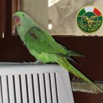#Messina. Un pappagallo ritrovato a Ganzirri, la Forestale cerca il proprietario