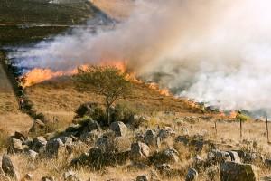 Incendio_caampagna_agricoltura