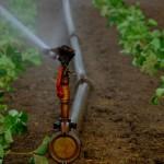 #Canicattì. Scoperte imprese agricole che truffavano l'INPS