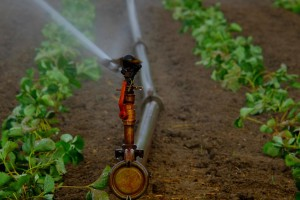 Irrigazione_agricoltura_campagna