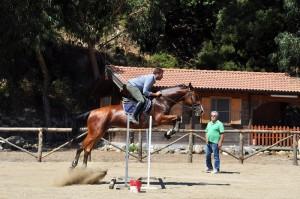 cavallo, equitazione