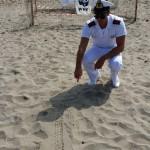 #Agrigento. Sono nate quaranta tartarughe sulla spiaggia di San Marco