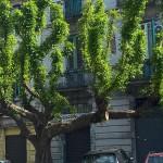 #Messina. Potature degli alberi: il via dal 16 gennaio