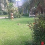 #Barcellona. Primi lavori di ripristino nei Giardini Oasi