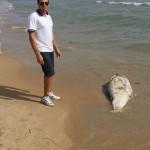 #Agrigento. Un delfino morto sulla spiaggia di Porto Palo di Menfi