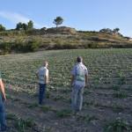 #Catania. Lotta al caporalato in agricoltura: dieci ore al giorno per trenta euro