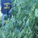 #Trapani. Sequestrano una discarica e scoprono una piantagione di canapa