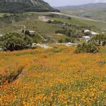 #Nicolosi. Sicily Landscape Day, convegno sulla tutela del paesaggio