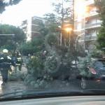 #Messina. Tragedia sfiorata: albero si schianta e si abbatte su auto