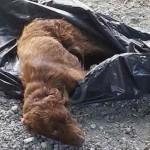 #Terme Vigliatore. Chiudono il cane in un sacco dell'immondizia e lo abbandonano