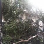 #Messina. Potatura alberi in un tratto di via del Santo, divieto di sosta fino alle 17