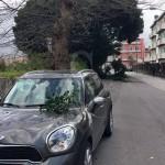 #Barcellona. Tragedia sfiorata: ramo d'albero centra l'auto dell'ex consigliere Galluzzo