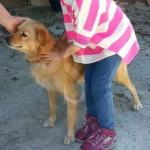 #Barcellona. Scomparso cane nella zona di San Francesco di Paola