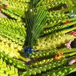 #Furnari. Rubano foglie di palma, arrestati due barcellonesi