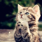 #Messina. Tutela degli animali: le accuse dei 5 Stelle all'amministrazione