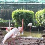 #Palermo. Parco d'Orleans, i 5 Stelle chiedono incontro con Regione