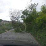 #Barcellona. Tragedia sfiorata: albero crolla pochi secondi prima del passaggio di un'auto